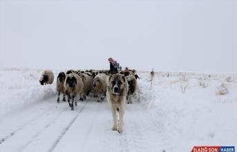Van'da tipide mahsur kalan iki çoban ile koyun sürüsü kurtarıldı