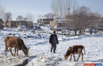 Bitlis'te besiciler, yüzeyi donan gölde buzu kırıp hayvanlara su içiriyor
