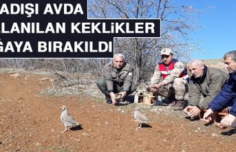 Yasadışı Avda Kullanılan Keklikler Doğaya Bırakıldı