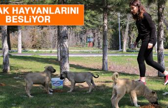 Elazığ'da Üniversite Öğrencisi, Sokak Hayvanlarını Besliyor