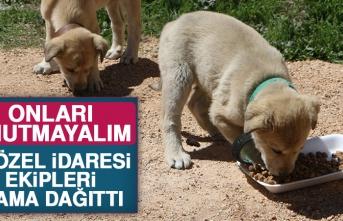 İl Özel İdaresi Ekipleri Sokak Hayvanlarına Mama Dağıttı