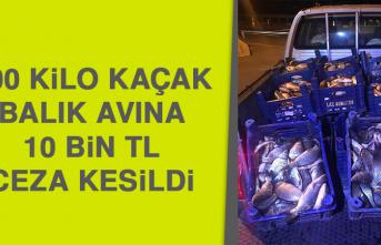 600 Kilo Kaçak Balık Avına 10 Bin Tl Ceza Kesildi
