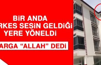 """Elazığ'da Bir Karga """"Allah"""" Dedi"""