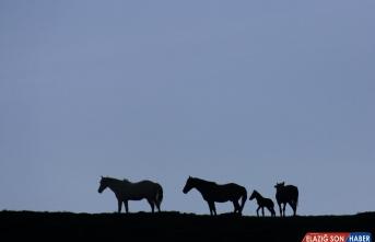 Mercan Dağları yavru yılkı atlarıyla şenlendi