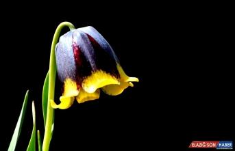 Sarıkamış, geç gelen baharda çiçeklerle süslendi