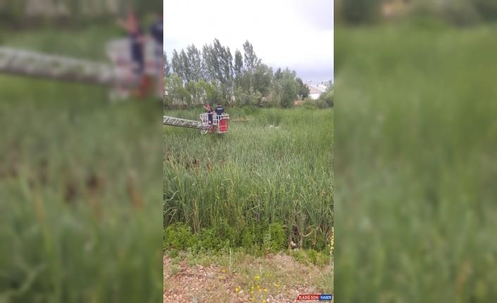 Ağrı'da bataklığa saplanan inekleri itfaiye ekipleri kurtardı