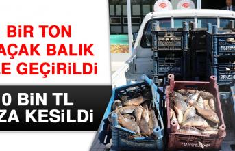 Bir Ton Kaçak Balık Ele Geçirildi, 10 Bin TL Ceza Kesildi