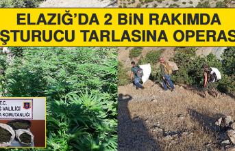 Elazığ'da 2 Bin Rakımda Uyuşturucu Tarlasına Operasyon