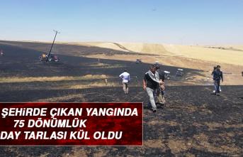 KOMŞU ŞEHİRDE Çıkan Yangında 75 Dönümlük Buğday Tarlası Kül Oldu