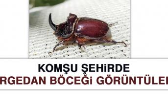 Komşu Şehirde Gergedan Böceği Görüntülendi