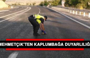 Mehmetçik'ten Kaplumbağa Duyarlılığı