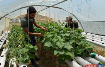 Üniversite öğrencisi Tunceli'de kurduğu topraksız serada sebze ve meyve üretti