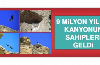 9 Milyon Yıllık Kanyonun Sahipleri Geldi