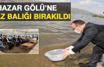 Hazar Gölü'ne Siraz Balığı Bırakıldı