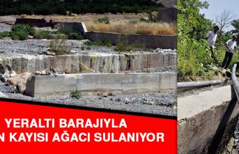 Yeraltı Barajıyla 30 Bin Kayısı Ağacı Sulanıyor