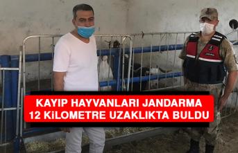 Kayıp Hayvanları, Jandarma 12 Kilometre Uzaklıkta Buldu