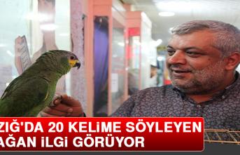 Elazığ'da 20 Kelime Söyleyen Papağan İlgi Görüyor