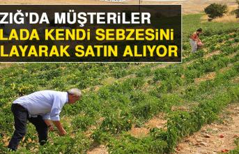 Elazığ'da, Müşteriler Tarlada Kendi Sebzesini Toplayarak Satın Alıyor