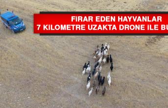 Firar Eden Hayvanlar, 7 Kilometre Uzakta Drone İle Bulundu