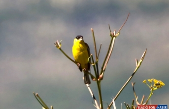 Nemrut Dağı'ndaki canlıları 4 yıldır fotoğraflıyor
