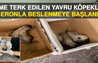 Ölüme Terk Edilen Yavru Köpekler, Biberonla Beslenmeye Başlandı