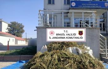 Bingöl'de 40 kilogram esrar ve 2 bin 150 kök Hint keneviri ele geçirildi