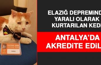 Elazığ Depreminde Kurtarılan Kedi, Antalya'nın Maskotu Oldu