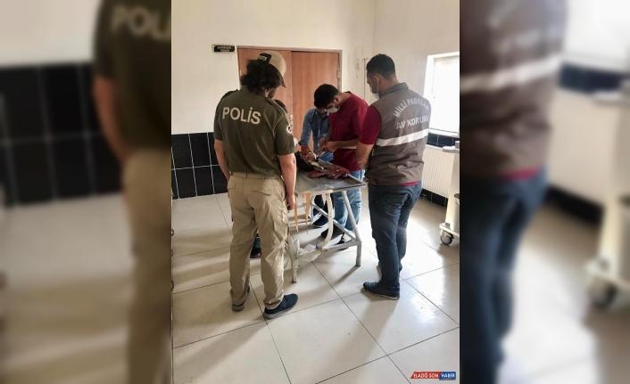 Kars'ta yabani hayvan kaçakçısı 3 kişiye 176 bin lira ceza