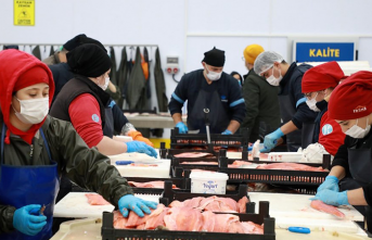 Rize'de Gelişen Balık İhracatı İstihdamı Artırıyor