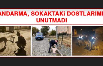 Jandarma, Sokaktaki Dostlarımızı Unutmadı