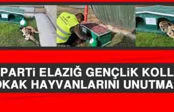 AK Parti Elazığ Gençlik Kolları Sokak Hayvanlarını Unutmadı