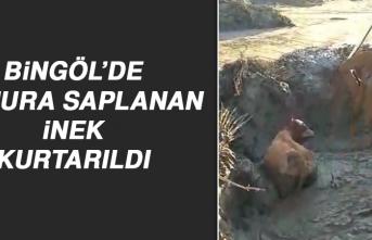 Bingöl'de Çamura Saplanan İnek Kurtarıldı