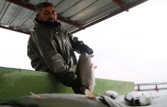 Fırat Nehri'nin alabalıklarına Avrupa'dan yoğun talep