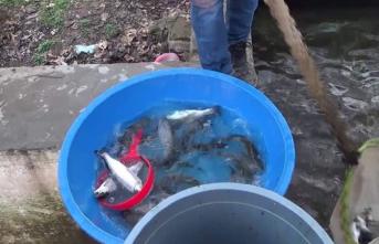 Siirt'te Sadece Bir Tesiste 20 Bin Ton Alabalık Üretildi