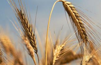 Tarım Kredi 2021'de 3.7 Milyar Liralık Ürün Alacak