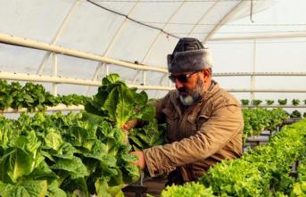 Türk Tarımı, Yatırımcılar İçin Cazibesini Koruyor