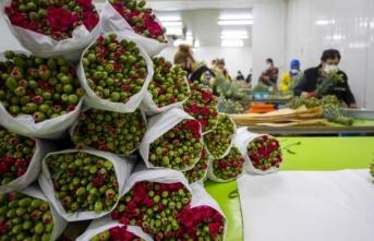 Türkiye'den Sevgililer Günü için 7 milyon dolarlık çiçek ihracatı