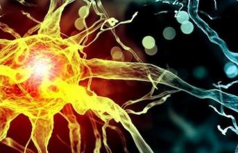 İnsan Beyninde, Ölümden Sonra Harekete Geçen Genler Bulundu