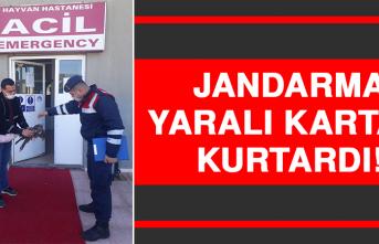 Jandarma, Yaralı Kartalı Kurtardı