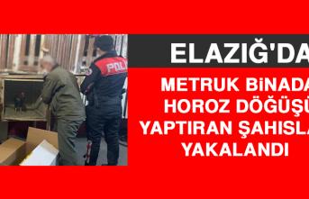 Metruk Binada Horoz Döğüşü Yaptıran Şahıslar Yakalandı