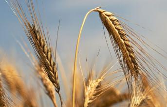Şubatta Tarım Ürünleri Üretici Fiyat Endeksi Yükseldi