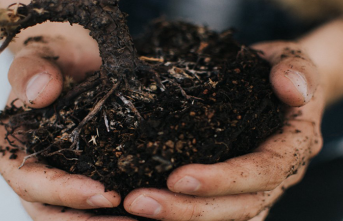 Toprak Yeme Hastalığı: Pika Sendromu Nedir?