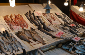 Av Yasağının Başlaması Mersin'de Balık Fiyatlarını Etkilemedi