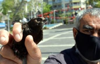 Sahur vakti bahçesine düşen ebabil kuşunu yetkililere teslim etti