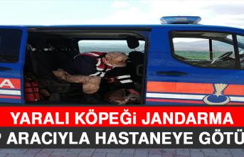 Yaralı Köpeği Jandarma, Ekip Aracıyla Hastaneye Götürdü