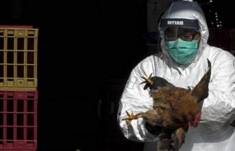 Çin'de İlk Kez İnsanda H10N3 Türü Kuş Gribine Rastlandı