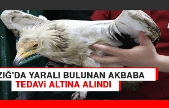 Elazığ'da Yaralı Bulunan Akbaba Tedavi Altına Alındı