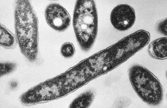 Bakterilerin açlığa 100 bin yıl dayanabileceği saptandı