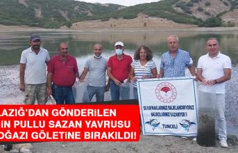 Elazığ'dan Gönderilen 100 Bin Pullu Sazan Yavrusu Günboğazı Göletine Bırakıldı