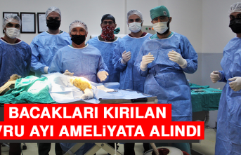 Bacakları Kırılan Yavru Ayı Ameliyata Alındı